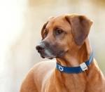 Домашние животные: новые сверхдоходы для ГНСС-трекинга